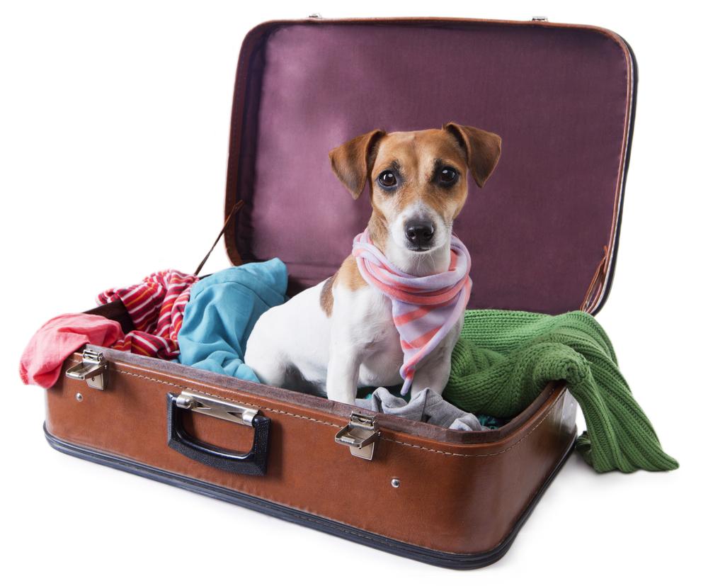 Chystáte sa na dovolenku so psom?