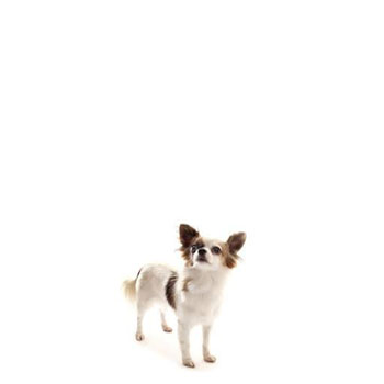 Psie búdy pre malé plemená