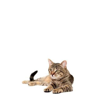 Vonkajšie domčeky pre mačky