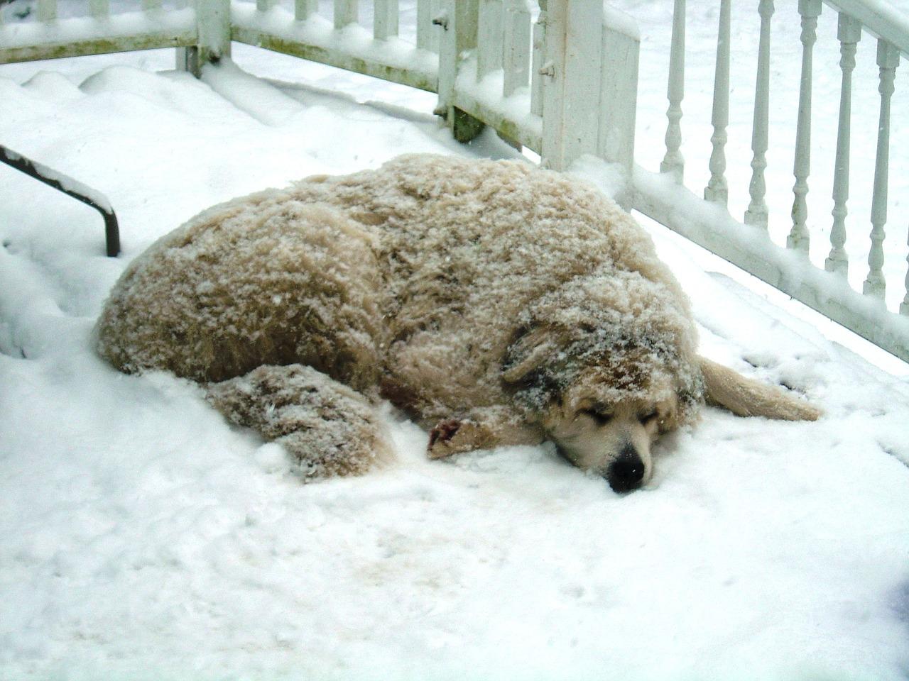 Na čo dať veľký pozor, keď pes nemá zateplenú búdu?