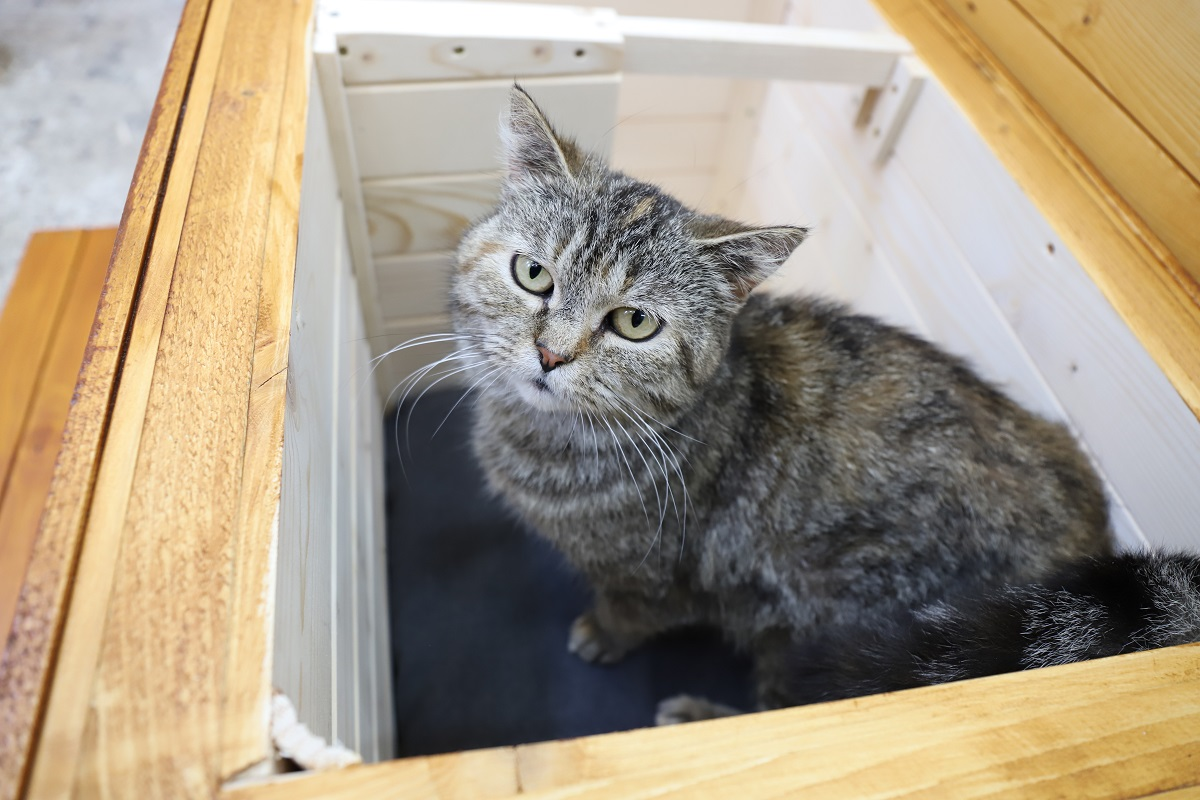 Domček pre mačku ELISA