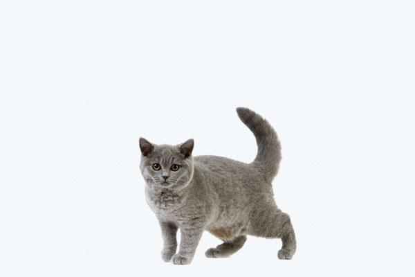 Zateplené domčeky pre mačky