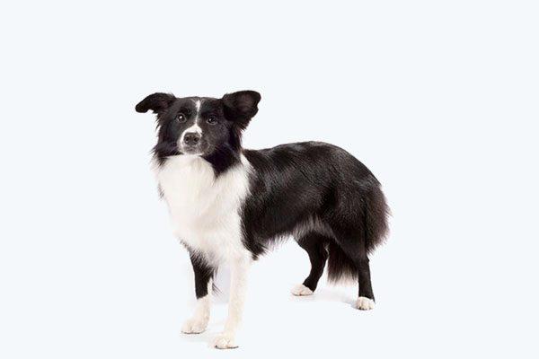 Zateplené búdy pre stredných psov