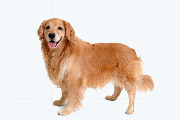 Zateplené búdy pre veľkých psov