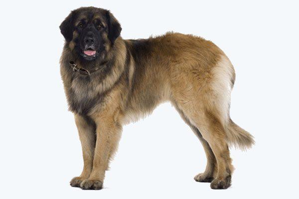 Zateplené búdy pre XXL psov