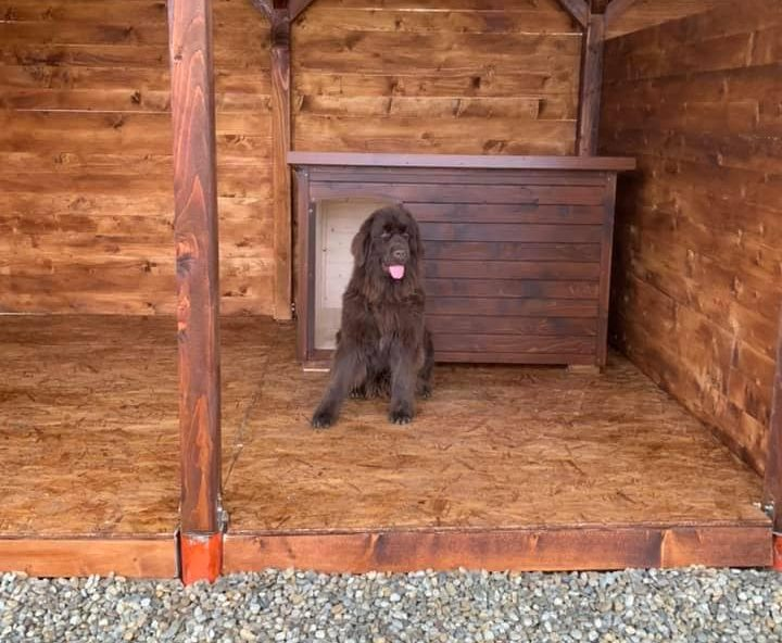 Zateplená psia bpda SPOT xxl